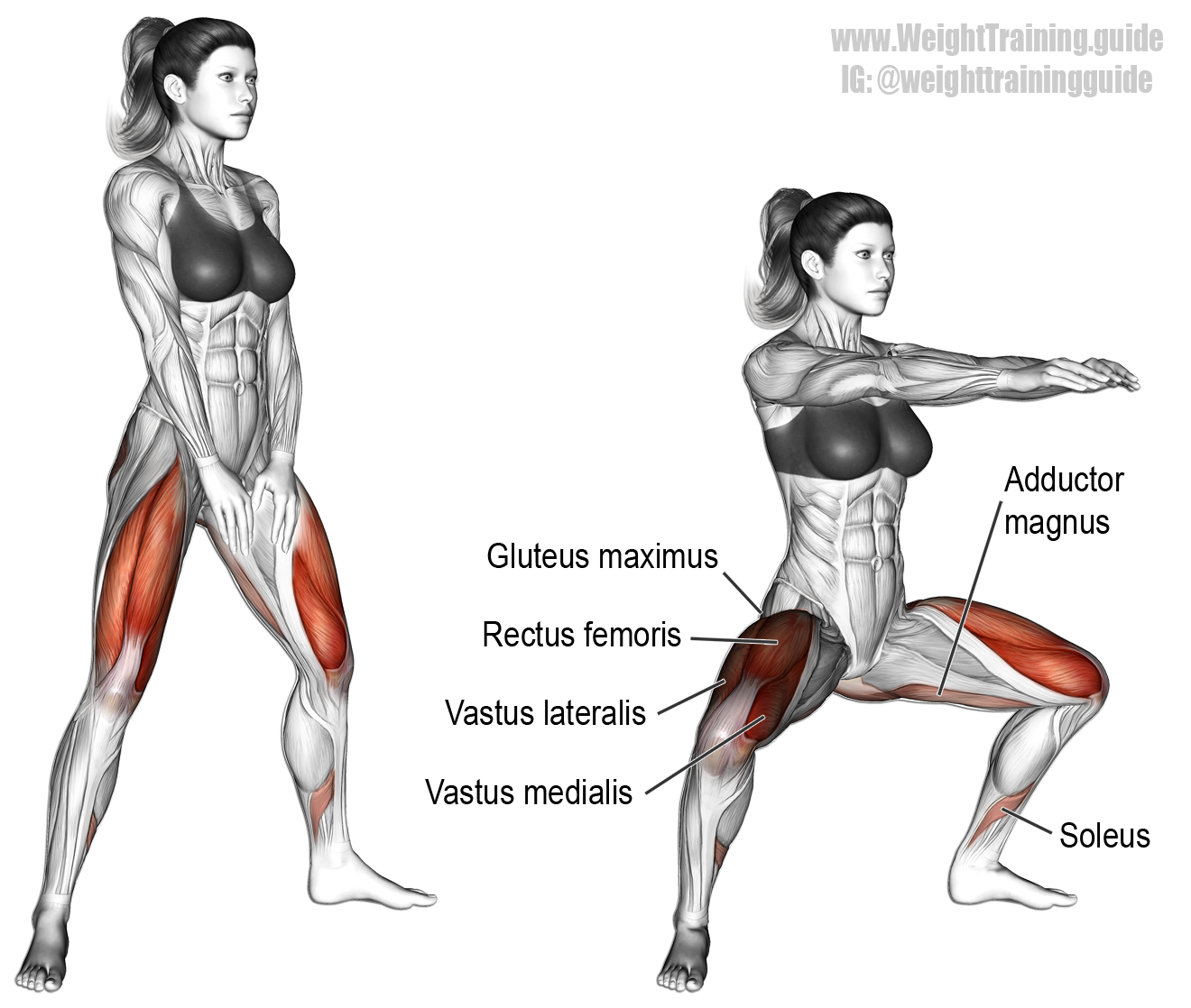 Bodyweight sumo squat instructions and video | Pinterest | Compound ...