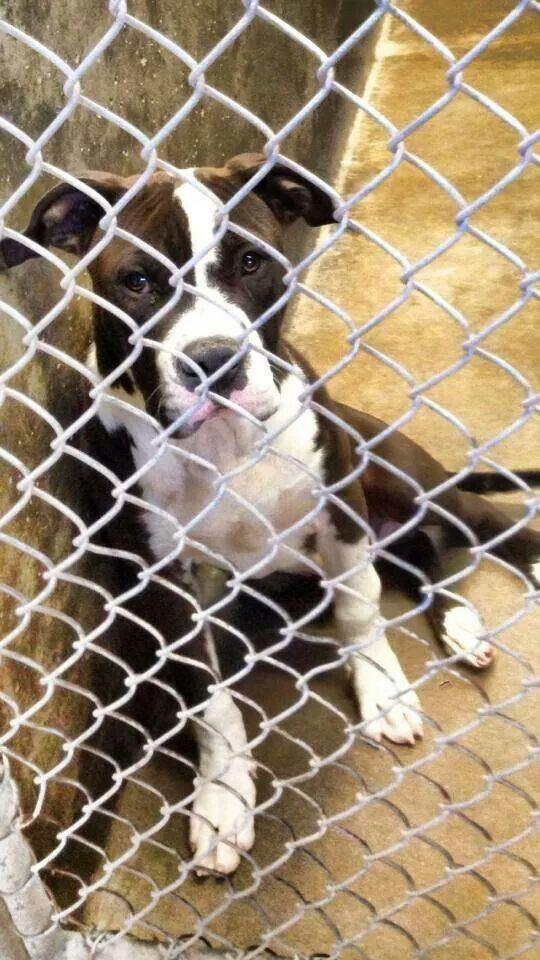 Odessa tx. rescue or adopt Poor dog, Dog adoption, Boxer mix
