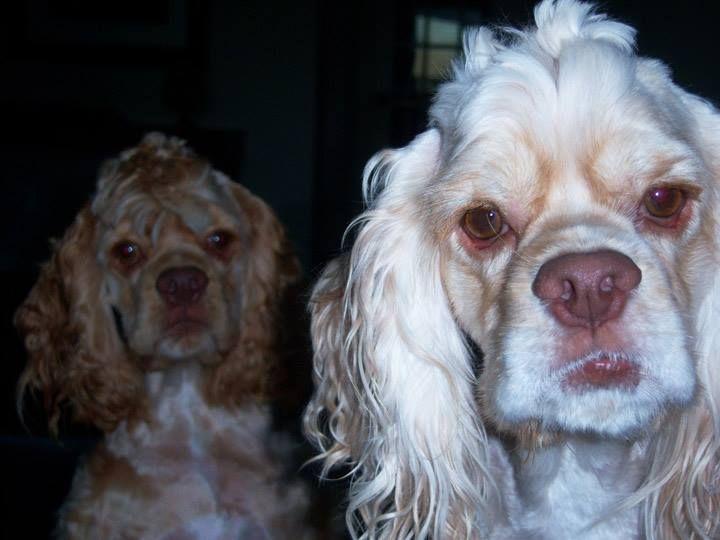 Sawyer Photobombs Trinity S Glamour Shot Glamour Shots Dogs