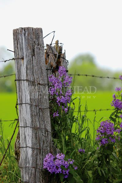 Country Purple Flowers With Fence Flowers Country