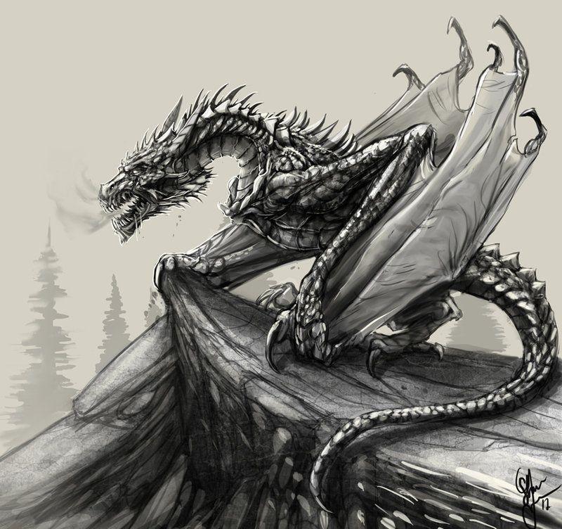 Pencil sketch dragon | Blitzkrieg the Dragon | Pinterest ...