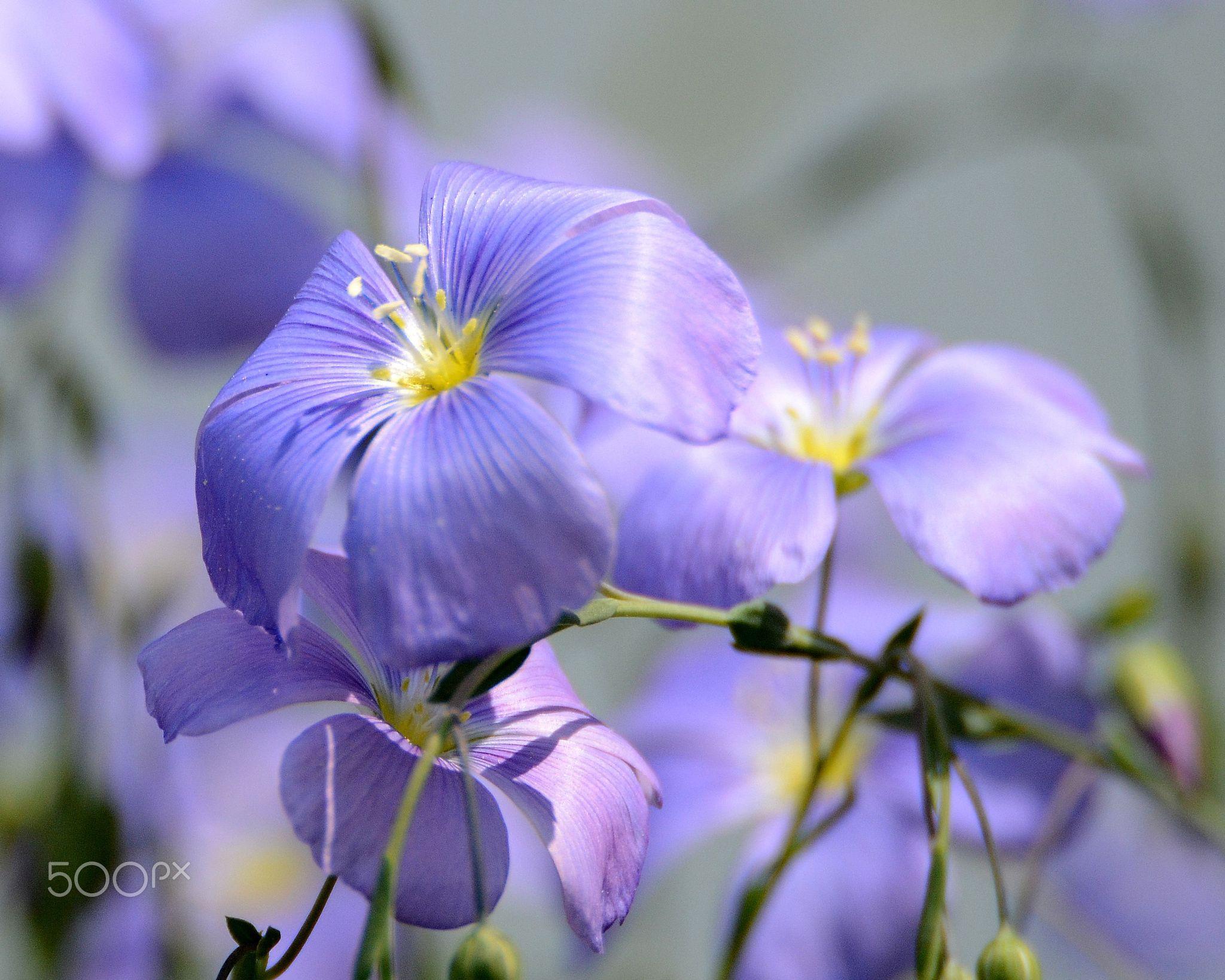 Wild Flowers - null