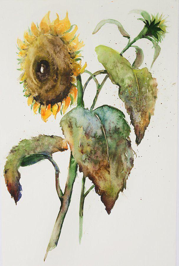 Lydia Leydolf Watercolor Aquarell Sonnenblume Blumen Aquarell