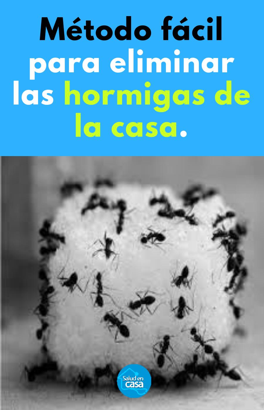 Como Acabar Con Las Hormigas En Mi Cocina Metodo Facil Para Eliminar Las Hormigas De La Casa Repelente De