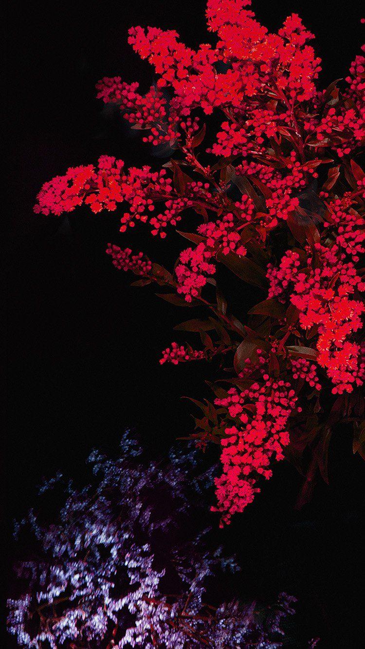 Apple Red Flower Dark Ios9 Iphone6s Wallpaper Hd Iphone Flower Iphone Wallpaper Red Flower Wallpaper Flower Wallpaper