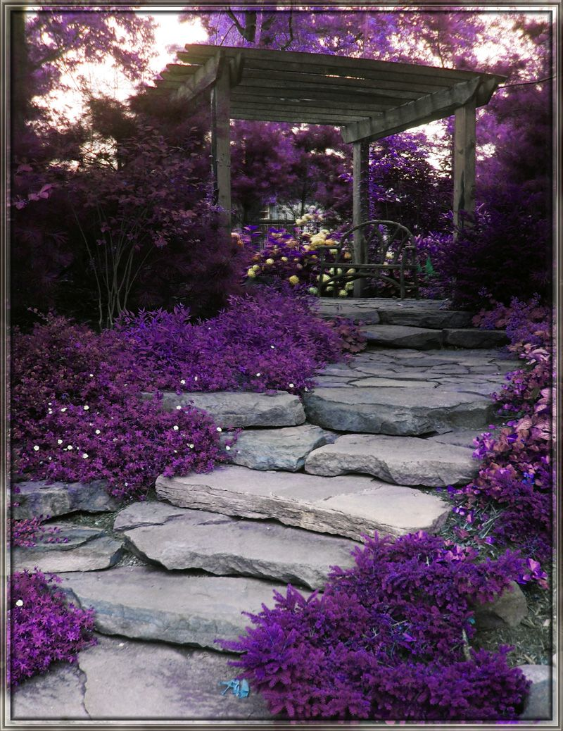 Photo of purple garden surrounded by a hedge and low growing ground covers