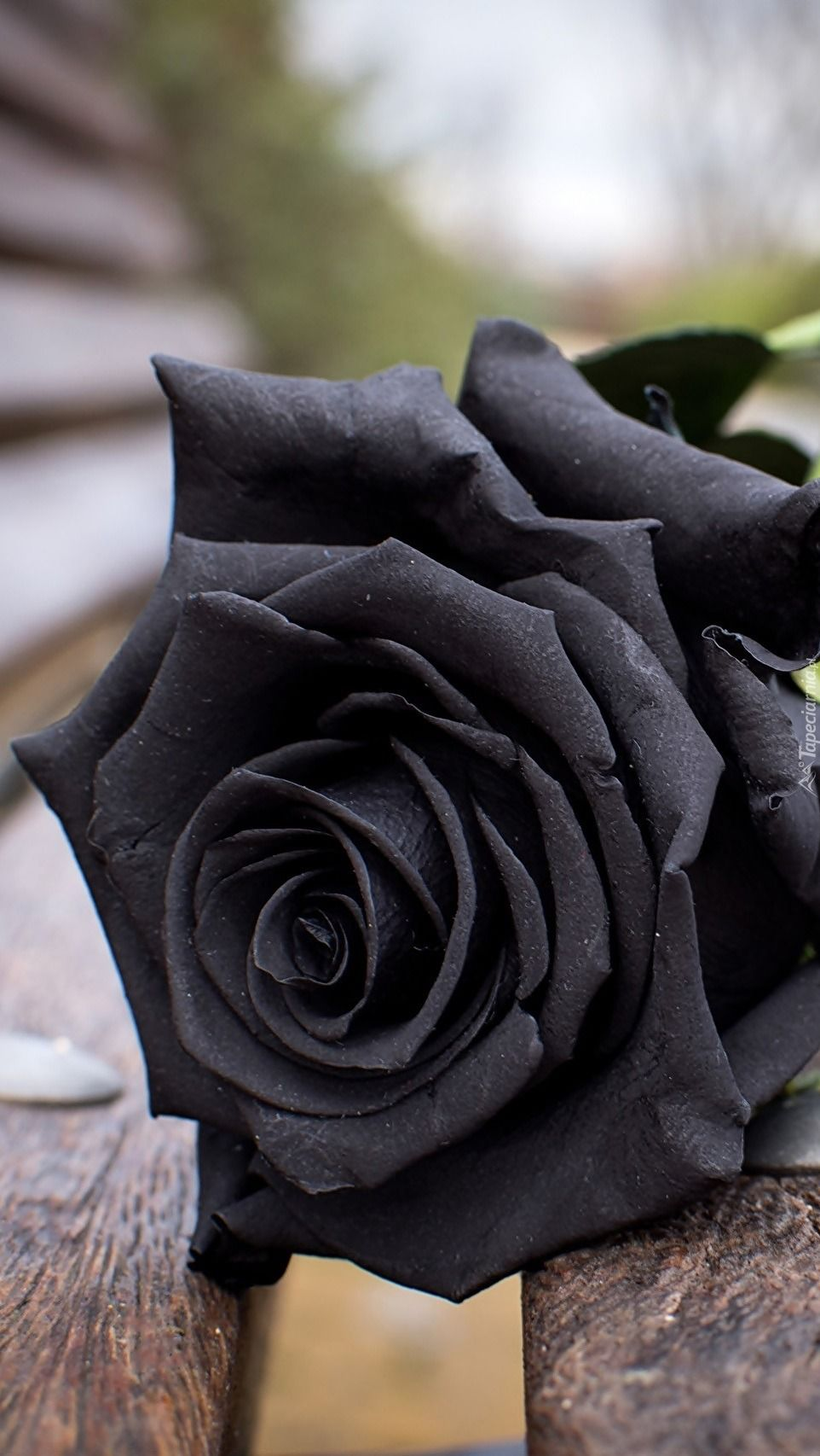 Don T Wait Life Goes Faster Than You Think Black Rose Flower Beautiful Rose Flowers Black Rose