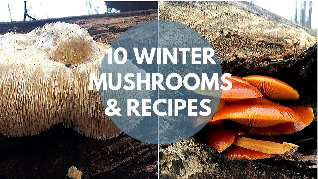 Mushroom Foraging and Cooking Guide 冬日野生菌食谱十种 - YouTube in ...