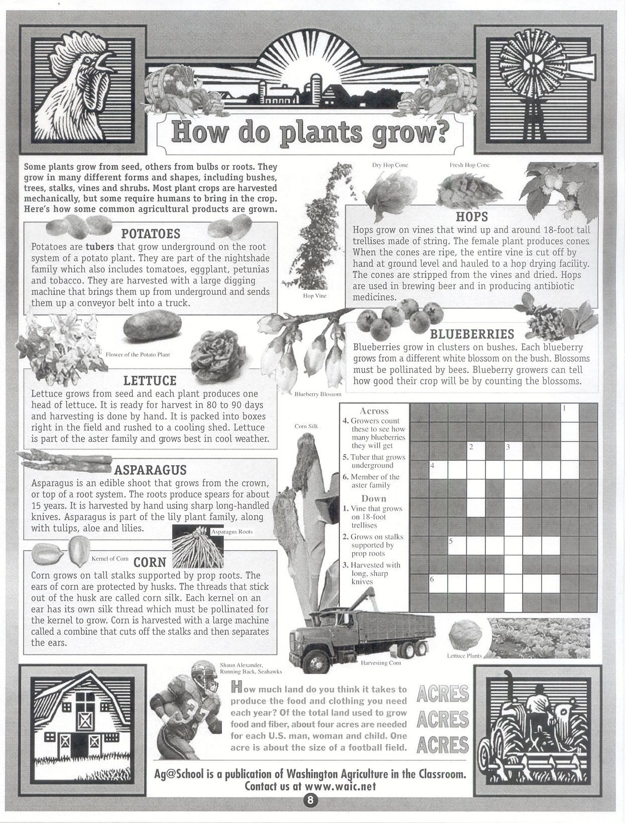 Landscaping Shrubs Crossword : How do plants grow crossword school garden asparagus