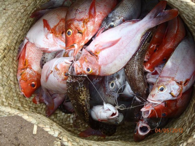 Climate change impacts countered by stricter fisheries management