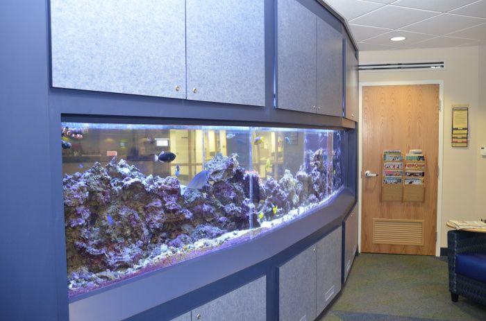 A fish tank wall makes for a fun kid friendly environment for Fun fish tank