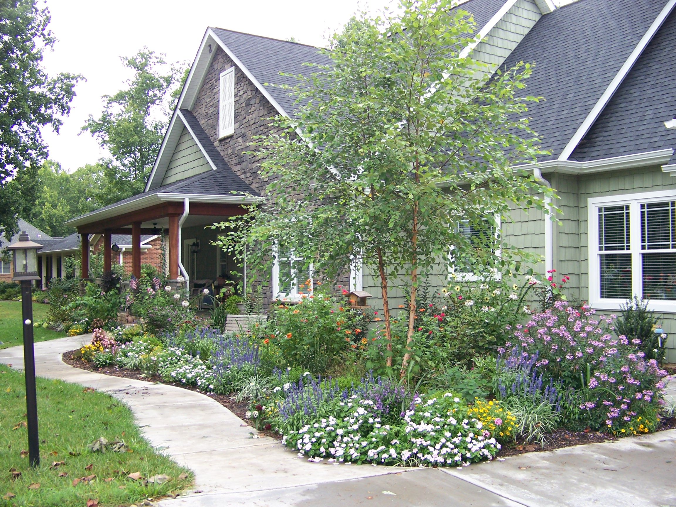 Superior Cottage Landscaping Ideas For Front Yard Part - 5: Landscape Ideas - Landscape Design Forum - GardenWeb, Heritage River Birch