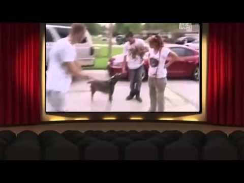 Pit Bulls And Parolees Season 4 Episode 4 Ghost Dog Episodes Pitbulls
