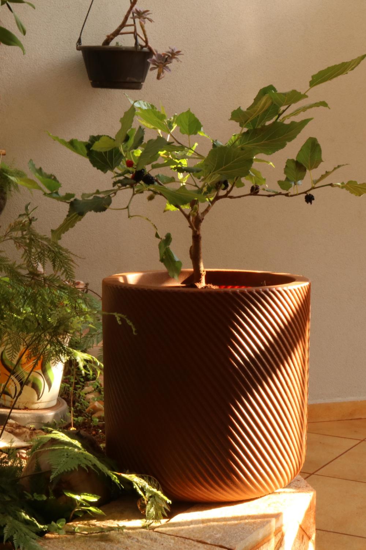 O vaso Vogue é leve, compacto e combina com vários ambientes. Feito em polietino, é fácil de limpar e não apodrece em contato com a água. Capacidade: 46 litros. #amoraemvaso #vasoparafrutiferas #frutiferas #casaejardim #vasovogue