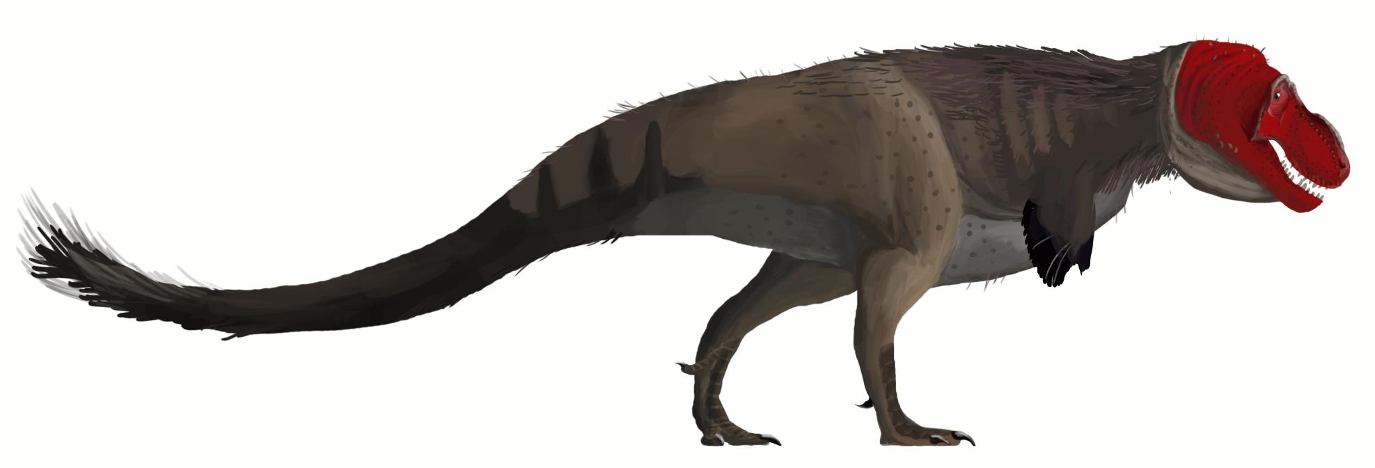 Tyrannosaurus_rex_mmartyniuk.png (1975×672) - Basé sur le spécimen AMNH 5027. Dinosauria, Saurischia, Theropoda, Tetanurae, Carnosauria, Tyrannosauroidea, Tyrannosauridae. Auteur : Matt Martyniuk, 2013.