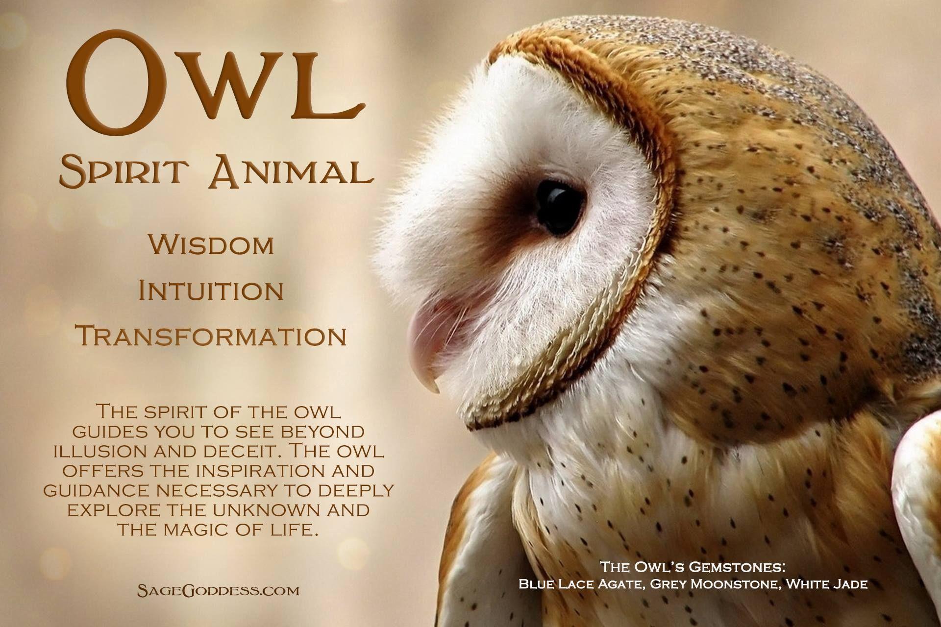 Owl spirit animal | Gemini | Spirit animal totem, Animal