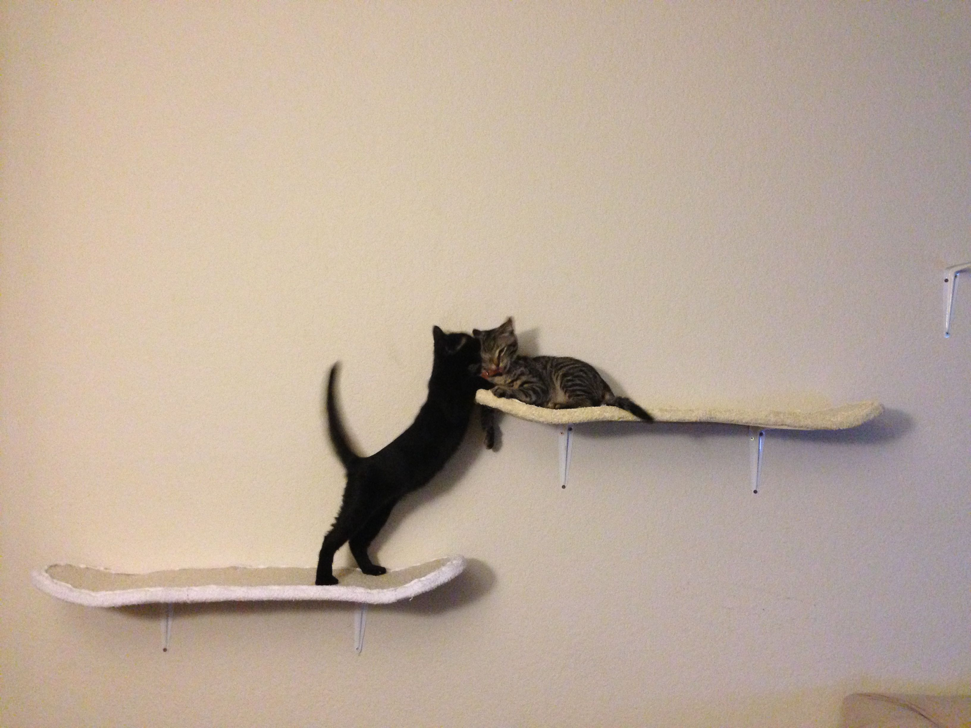 DIY Skateboard Deck Cat Scratcher. I bet someone out there can make this  better and