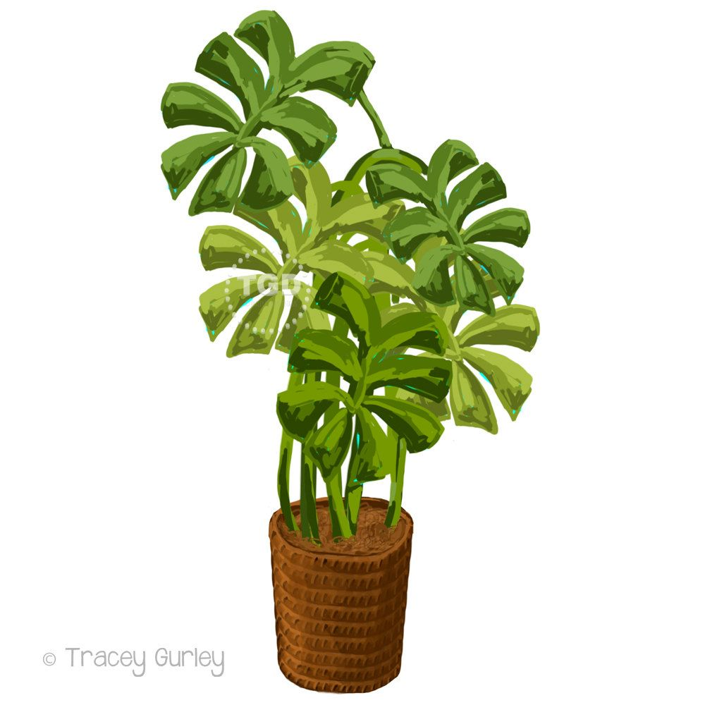 tropical plant clip art philodendron painting original