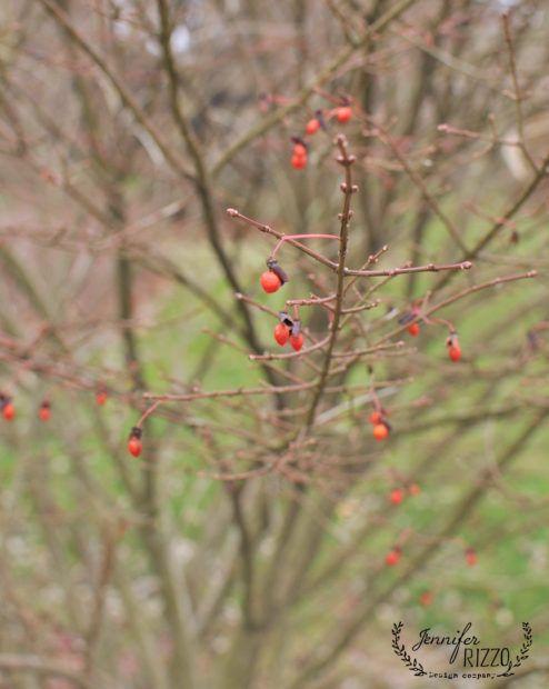 Pin On Jennifer Rizzo S Garden And Yard Gardening Ideas