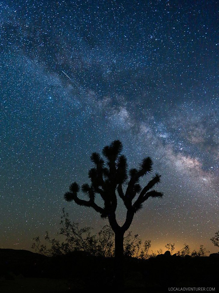 Stargazing at Joshua Tree National Park // http://localadventurer.com