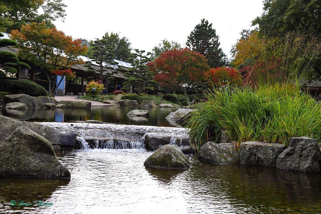 Guten Morgen Freunde Der Japanische Garten Als Teil Von Planten Und Blomen Im Herbst Immer Wieder Schon Anzuschaue Japanischer Garten Garten Schone Aussicht