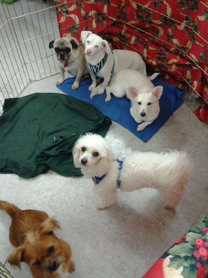 Jeepers, Jasmine, Trusty, Chief, and Mugsy need homes! At