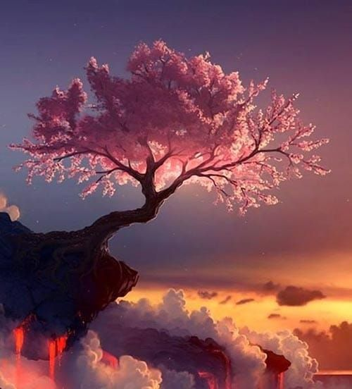 cerisiers du japon les plus belles photos o le rose est. Black Bedroom Furniture Sets. Home Design Ideas