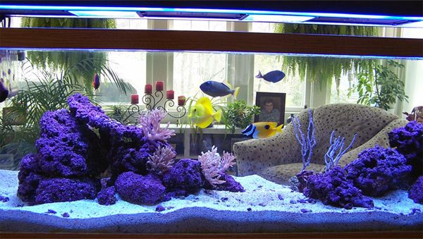 Jeff 39 s 125 gallon reef aquarium terrarium at home for 125 gallon fish tank