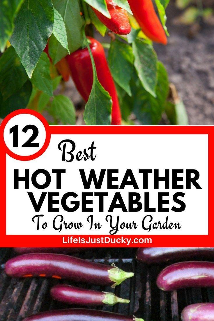 12 Best Hot Weather Vegetables To Grow In Your Garden 640 x 480