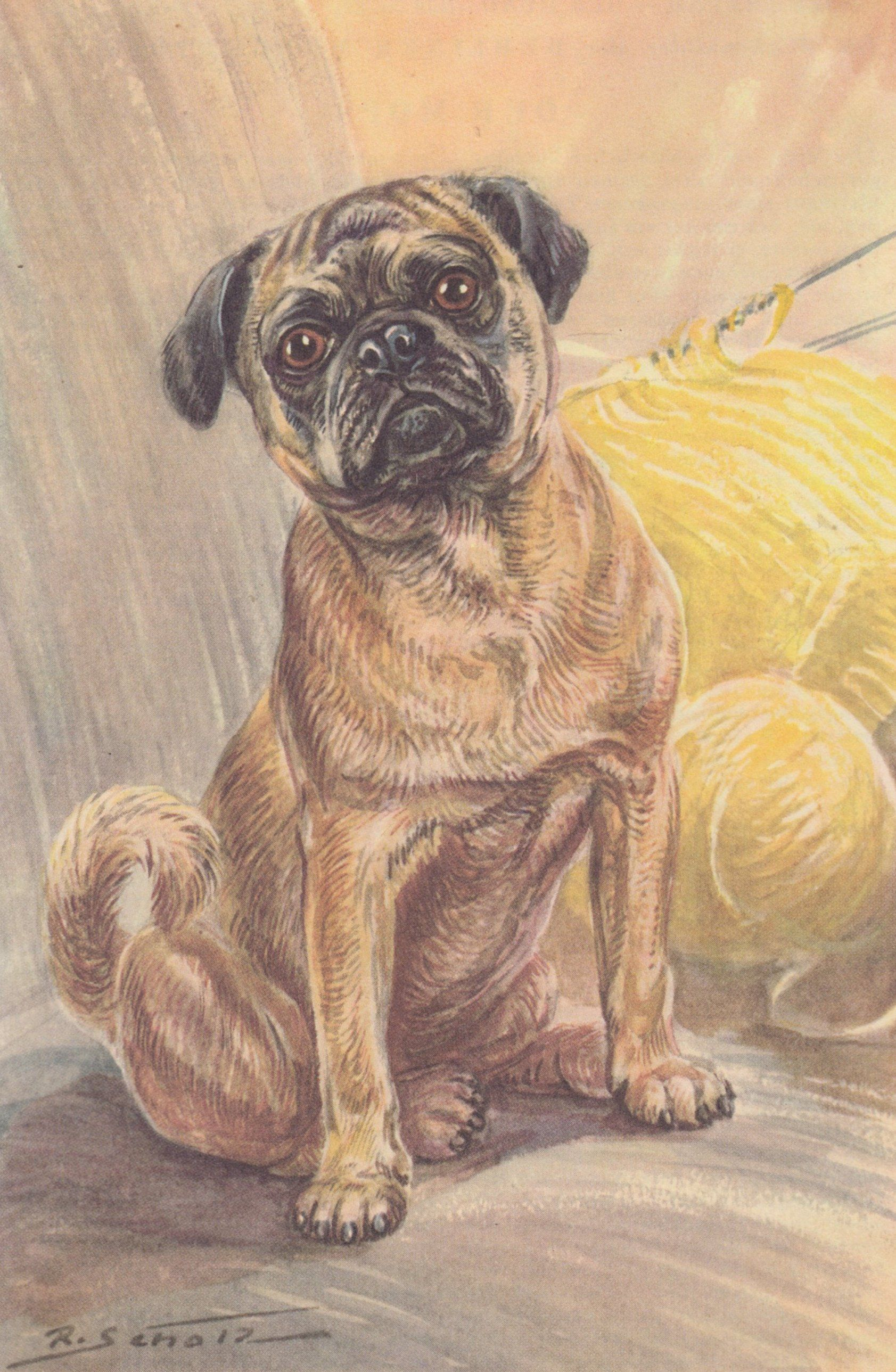 Vintage Pugs Pug Dog Color Dog Art Print 1960 By R Scholz Dog
