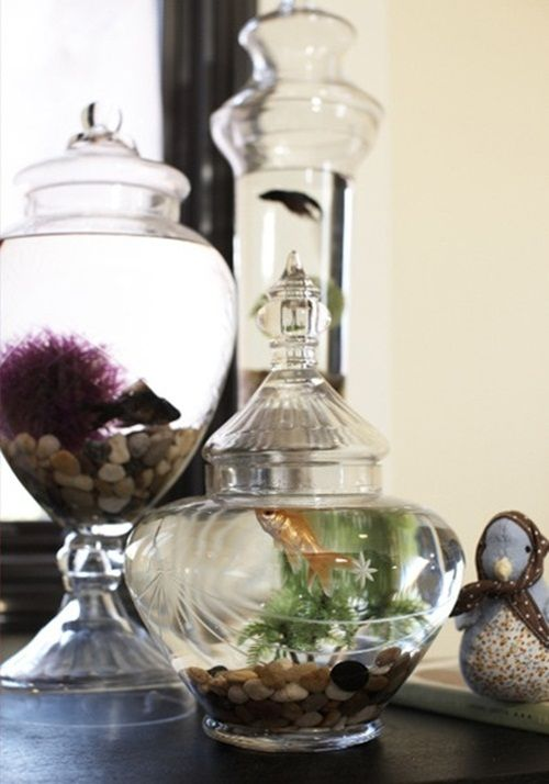 30 Fish Tank Ideas That Will Make Any Home More Lively