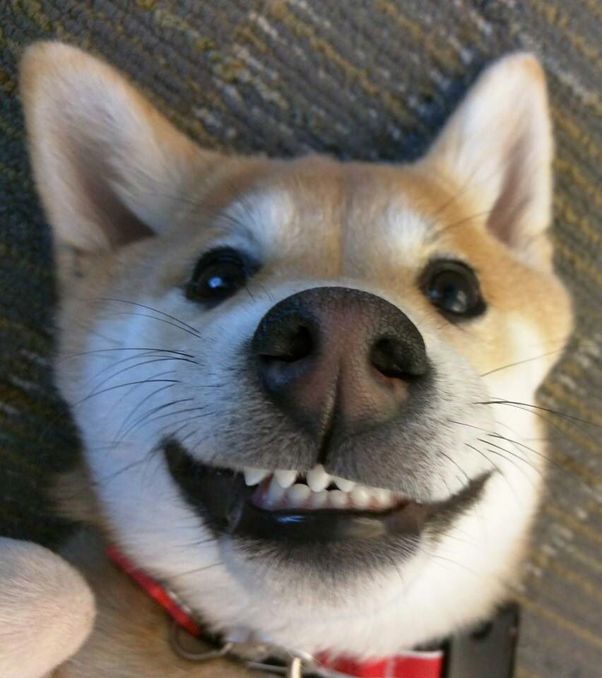 Funny Dog Puppy Snuggles Dog Selfie Smiling Dogs