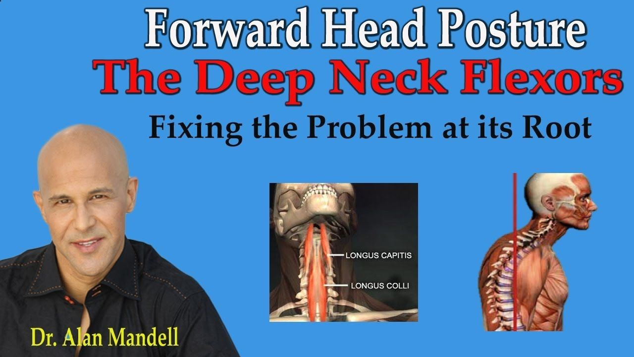 The Deep Neck Flexors Are The First Muscles To Weaken In Forward