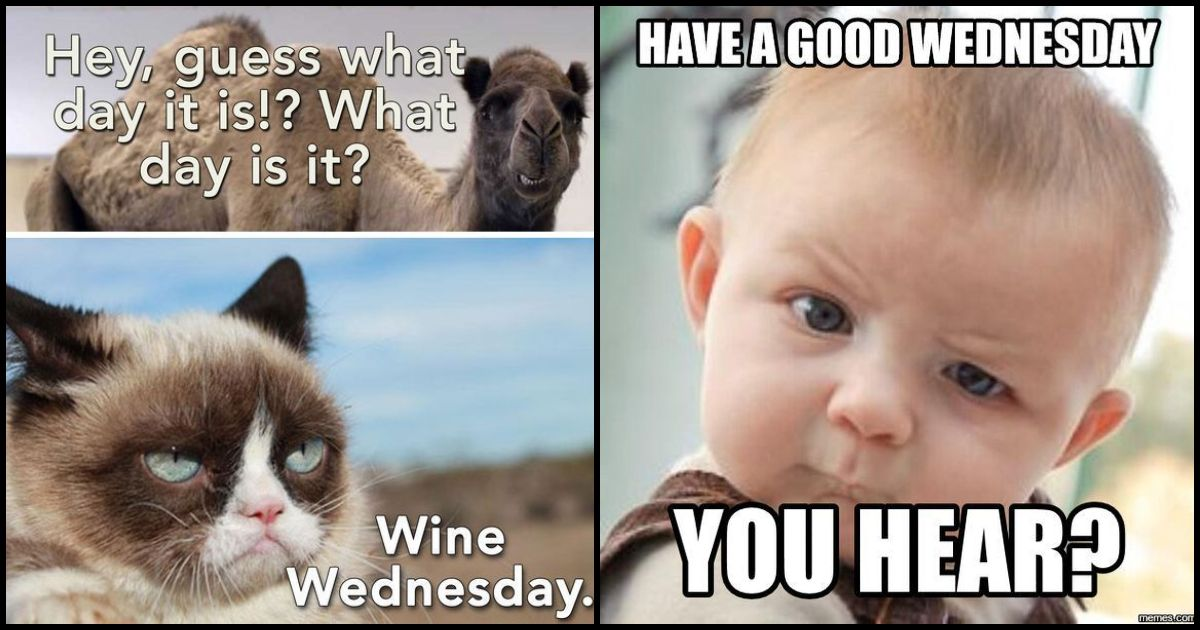100 Wednesday Memes About The Third Day Of The Week Funny Wednesday Memes Wednesday Memes Work Memes
