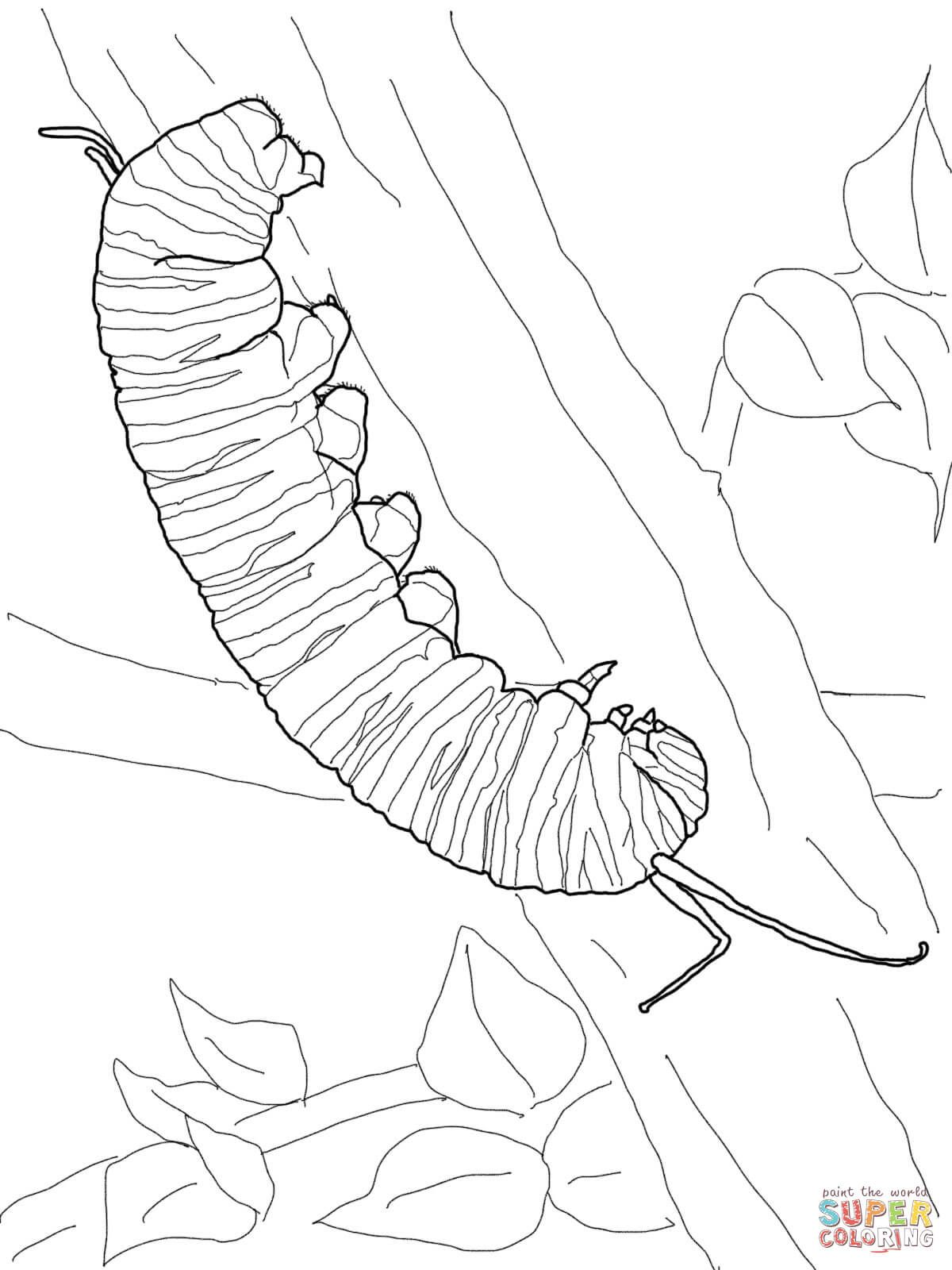 Monarch Caterpillar Coloring Page Free Printable Coloring Pages