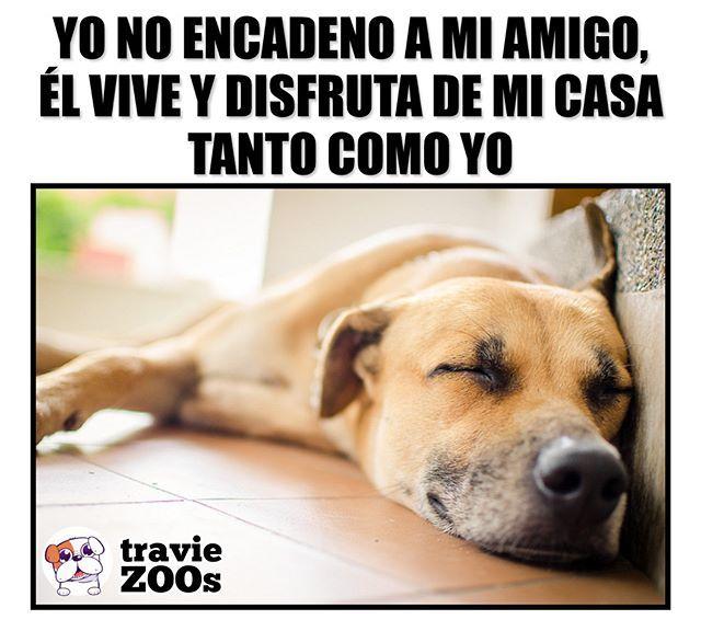 No Es Un Objeto Decorativo Perro Dog Encadenado Animales Injusticia Pets Pets Pretty Animals I Love Dogs