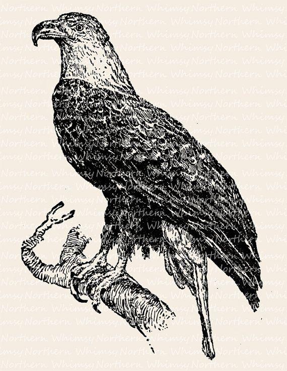 Bald Eagle Image - Vintage Bird of Prey Clip Art Illustration