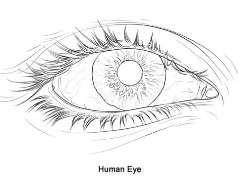Human eye coloring page from anatomy category select from 20946 printable crafts of cartoons