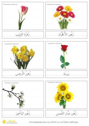 بطاقات الأزهار بصور فوتوغرافية بطاقات المونتسوري المكونة من ثلاثة أجزاء 1 Plants