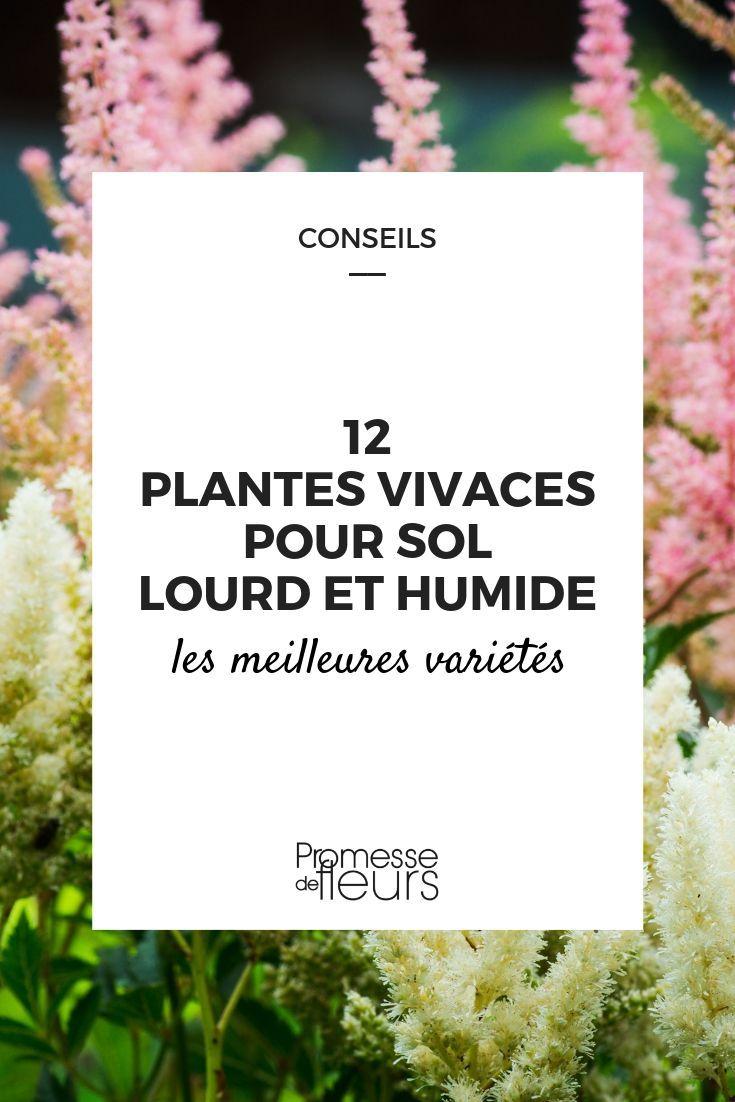 Quoi Planter Dans Une Terre Argileuse 12 vivaces pour sol lourd et humide | vivaces couvre sol