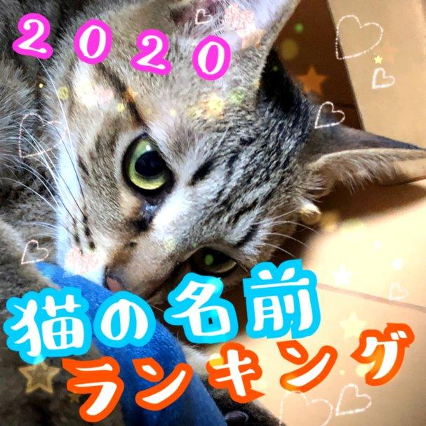 猫の名前ランキング2019 オスは今風 和風 メスはかわいい名前 猫の名前 猫 キジトラ猫