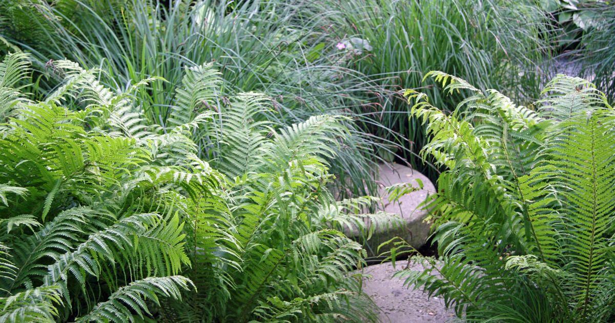 Schattige Zimmerpflanzen farne pflanzen pflege und tipps pflegeleichte zimmerpflanzen