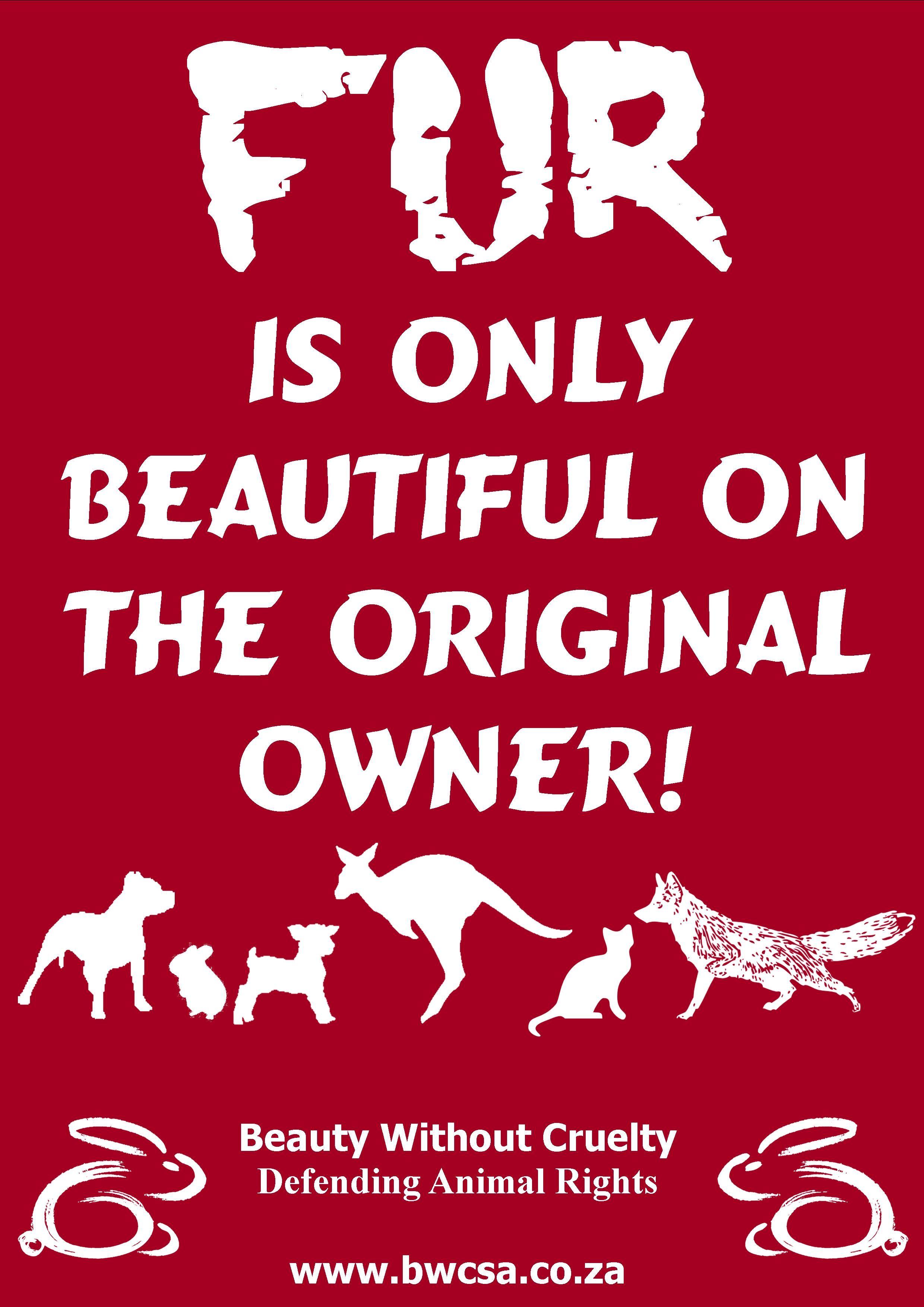 Animal Rights Quotes Say No To Fur  Animalsarehumanstoo  Pinterest  Animal Cruelty