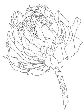 Protea Coloring Page Supercoloring Com Protea Art Folk Art Flowers Outline Drawings
