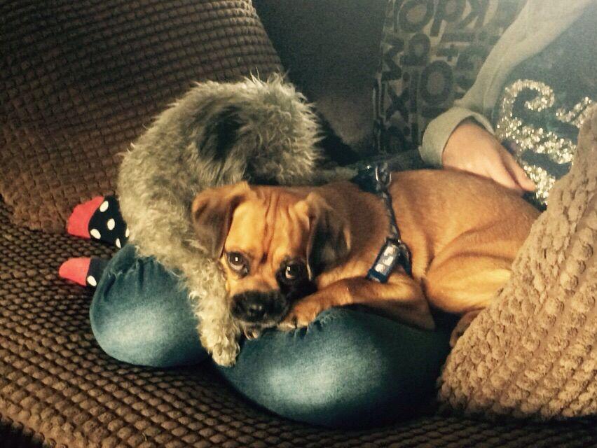 Puppy snuggles.....❤️