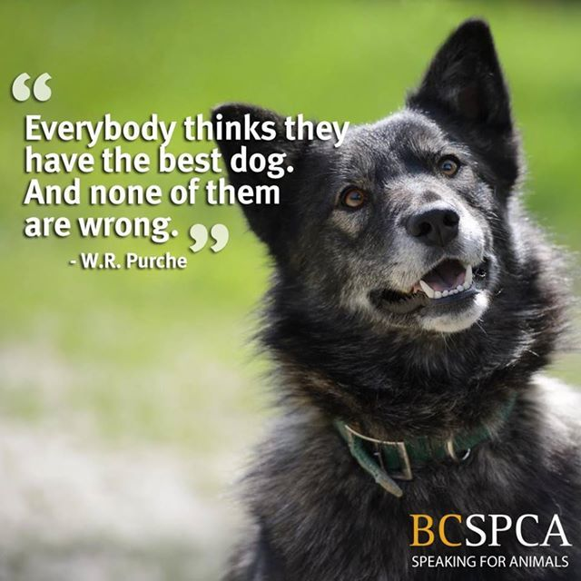 Adoption Page Dogs Animals Best Dogs