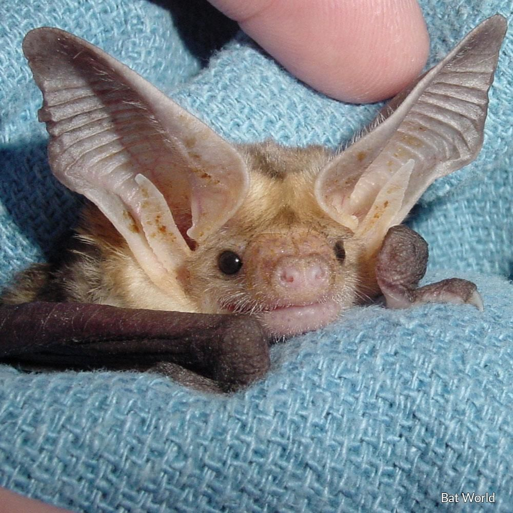 Save Injured, Orphaned and Abused Bats #animalrescue