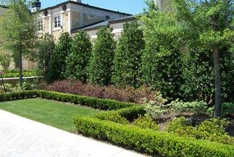 Planting A Privacy Screen Privacy Trees Backyard Backyard Trees