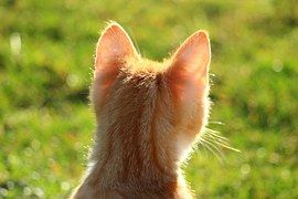Cat, Red - Free images on Pixabay