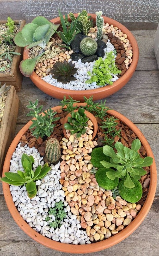 362 Best Landscape Ideas To Get Inspiration Your Home Garden Page 18 Myblogika Com Succulent Garden Indoor Mini Cactus Garden Succulents